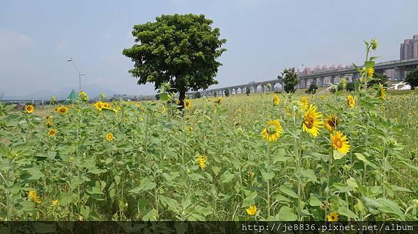0903幸福水漾公園 012.JPG