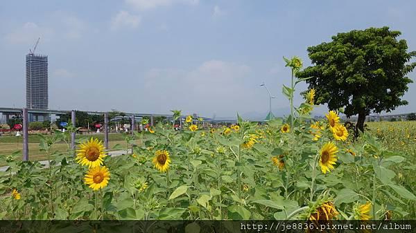 0903幸福水漾公園 013.JPG