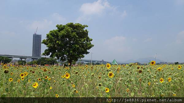 0903幸福水漾公園 015.JPG