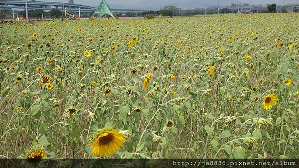 0903幸福水漾公園 016.JPG