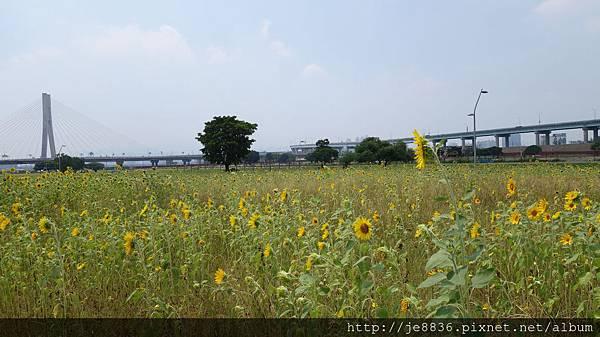 0903幸福水漾公園 018.JPG