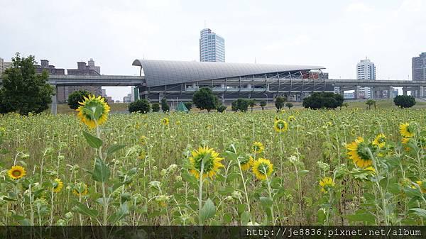 0903幸福水漾公園 022.JPG