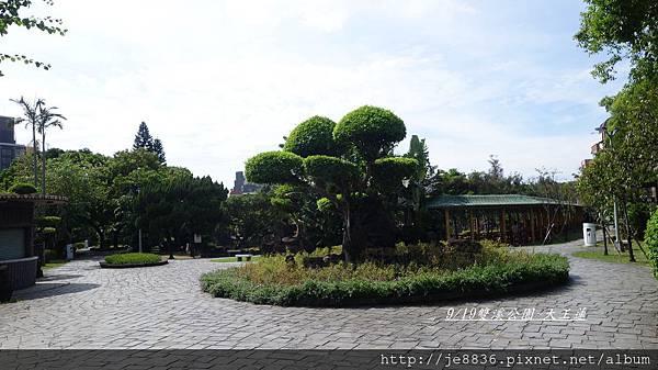 0919雙溪公園大王蓮 002.JPG