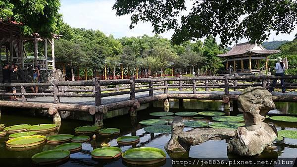 0919雙溪公園大王蓮 029.JPG