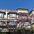 0124法國小鎮寒櫻 (1).jpg