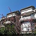 0124法國小鎮寒櫻 (2).jpg