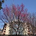0124長庚養生村花海 002.JPG
