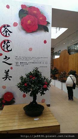 2015茶花展 024.JPG