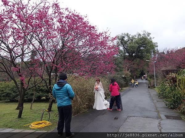 2015茶花展 149.JPG