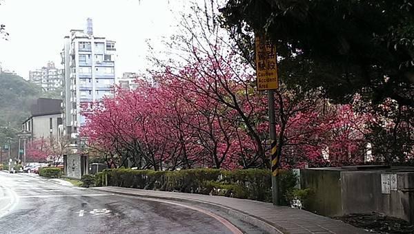 2015陽明山花季 (48)