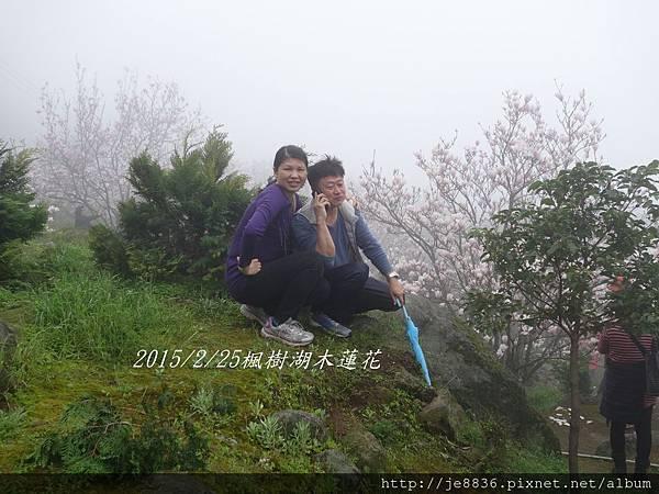 0225楓樹湖木蓮花  (52).JPG