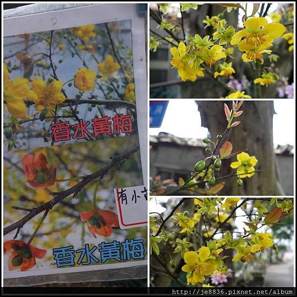 0225櫻花林 (32).jpg