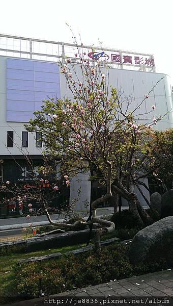 0303扶輪公園 (2).jpg