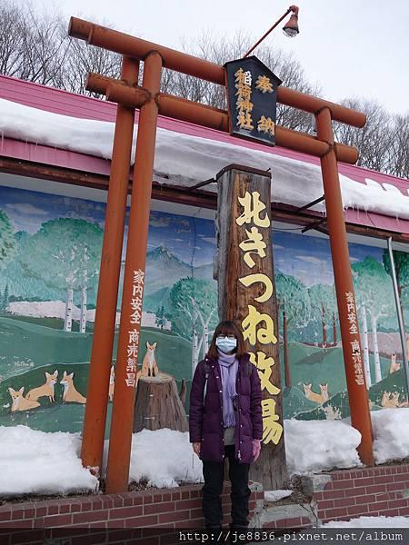 0130北見狐狸村 (5).JPG
