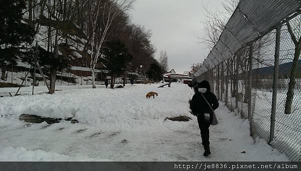 0130北見狐狸村手機版   (31).jpg