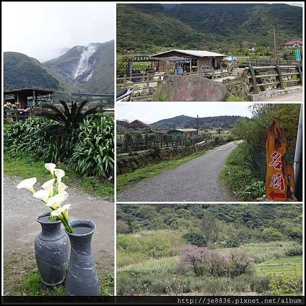 2015竹仔湖海芋 (1).JPG