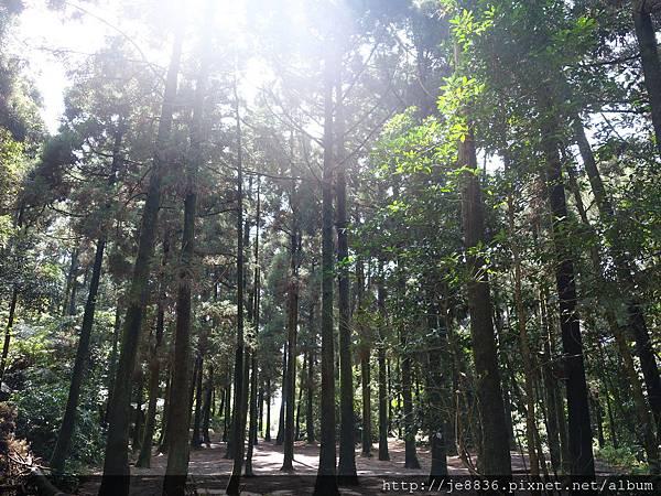2015竹仔湖小山林溪 (2).JPG