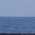 0726龜山島賞鯨一日遊 048.JPG