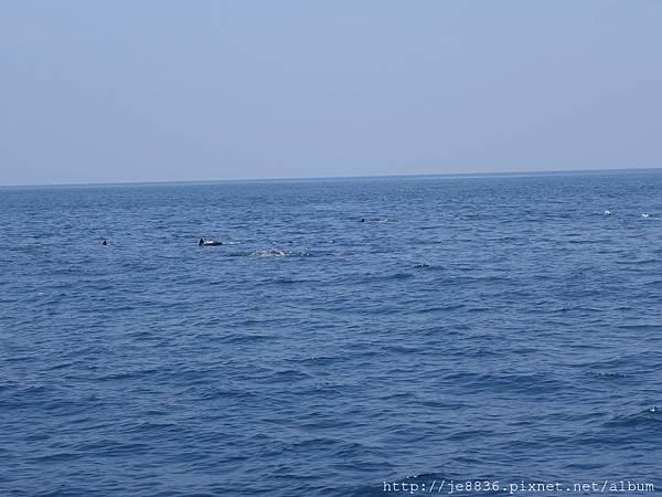 0726龜山島賞鯨一日遊 051.JPG