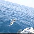 0726龜山島賞鯨一日遊 053.JPG