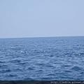 0726龜山島賞鯨一日遊 063.JPG