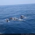 0726龜山島賞鯨一日遊 072.JPG