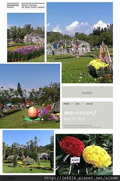 1117士林官邸菊展~嘻遊秋菊 (128).jpg