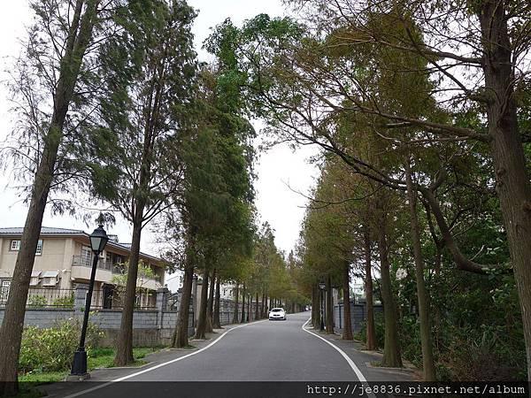 1203大溪~落羽松大道 (2).JPG