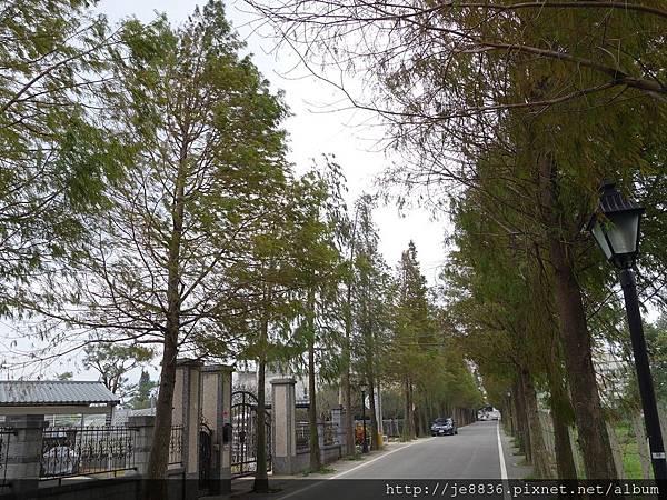1203大溪~落羽松大道 (5).JPG