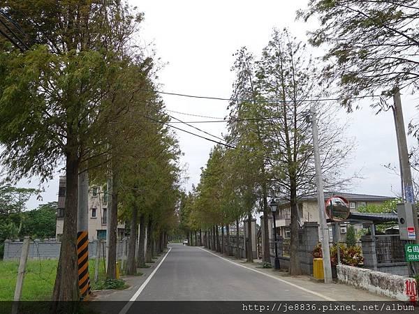 1203大溪~落羽松大道 (14).JPG