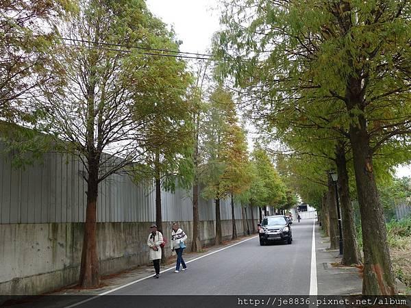 1203大溪~落羽松大道 (19).JPG
