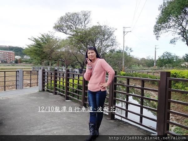 1211龍潭花海 (10).JPG