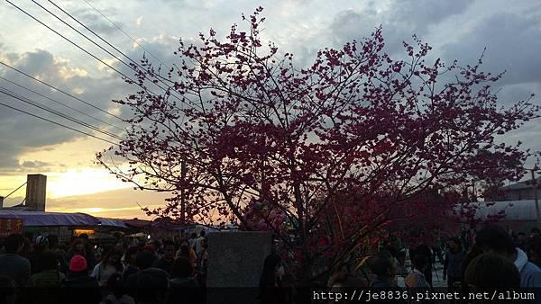 0228泰安櫻花手機版 (19).jpg