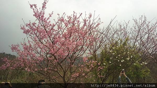 0229陽明山半日遊 (53).jpg
