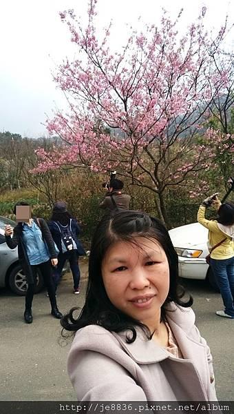 0229陽明山半日遊 (54).jpg