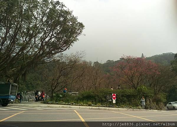 0229陽明山半日遊 (55).jpg
