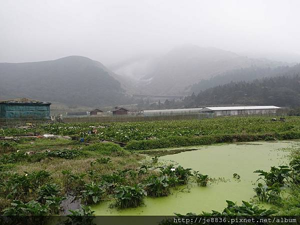 0229陽明山半日遊 (36).JPG