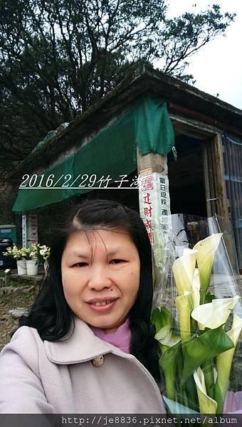 0229陽明山半日遊 (70).jpg
