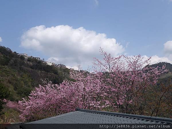 0307中巴陵櫻木花道 (52).JPG