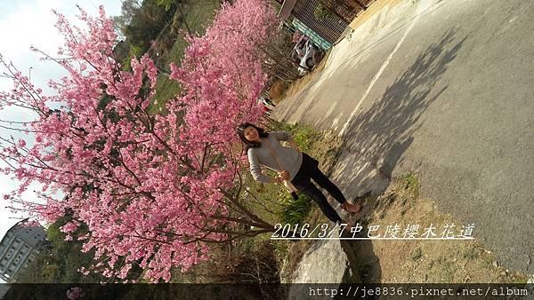 0307中巴陵櫻木花道手機版 (19).jpg