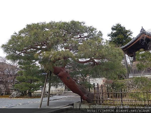 0123天龍寺庭苑 (25).JPG