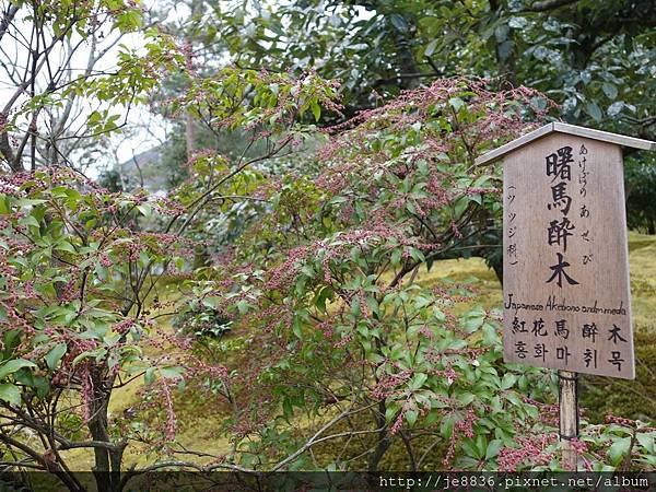 0123天龍寺庭苑 (42).JPG