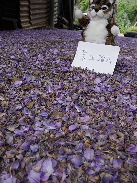 0408陽明山~東方寺 (45)