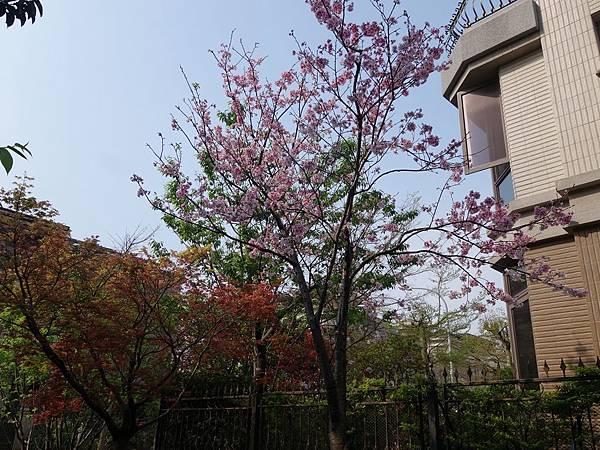 0410法國小鎮紫藤季 (14).JPG