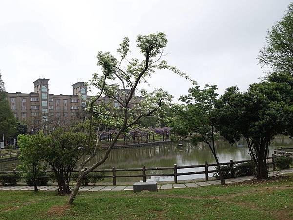 0408大湖公園紫藤 (3).JPG