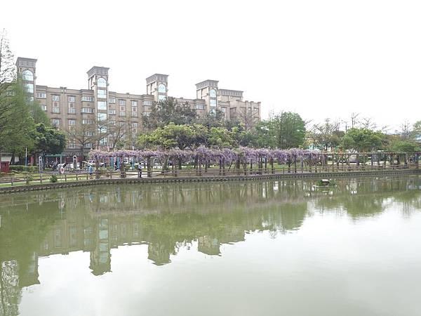0408大湖公園紫藤 (13).JPG