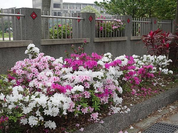 0408大湖公園紫藤 (18).JPG