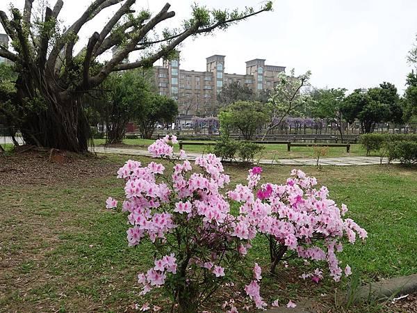 0408大湖公園紫藤 (17).JPG