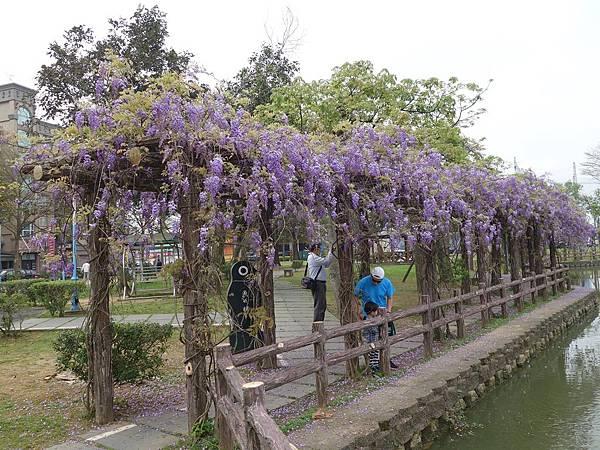 0408大湖公園紫藤 (22).JPG