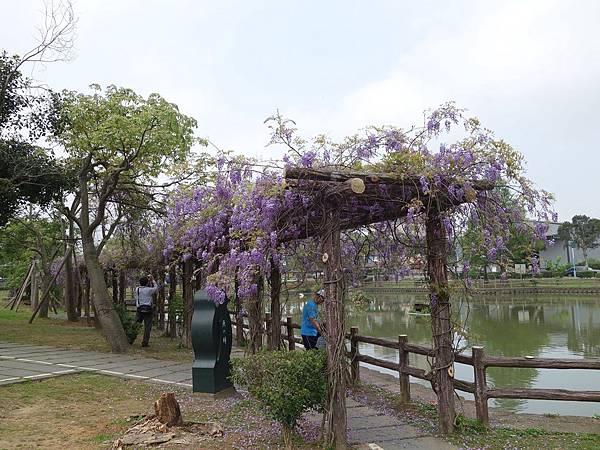 0408大湖公園紫藤 (26).JPG